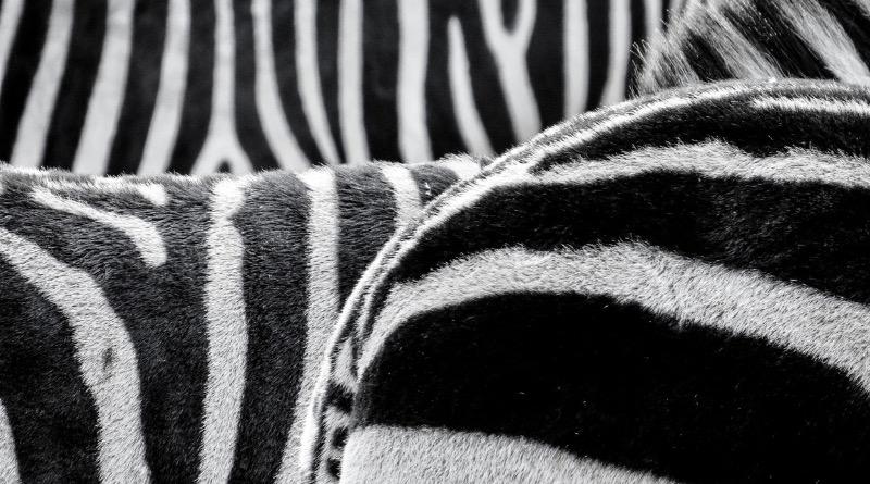 Naprawa drukarek etykiet przez serwis Zebra